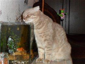 домашняя рыбалка