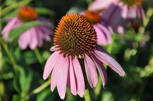 Люблю этот цветок за его  яркость