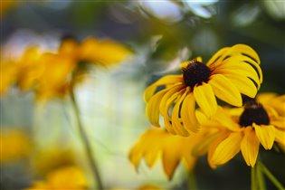 Яркий..Солнечный...цветущий Июль*