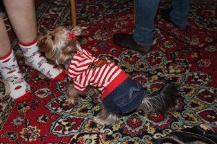 фотоконкурс моя маленькая собака