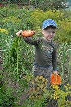 'Вот какая морковка у бабушки выросла!'