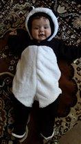 наша панда