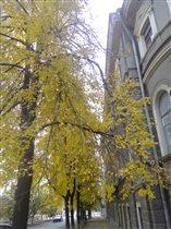 Жёлтенькое дерево, а рядом серый дом! :)