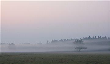 Ложился на поля туман...