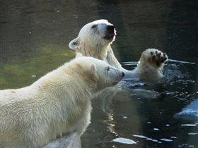 Мы с братом плаваем вдвоем...