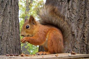 Белка песенки поет и орешки все грызет