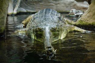 Крокодил!