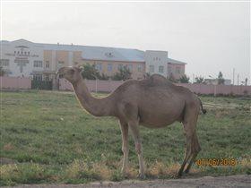 На улицах древнего Туркестана