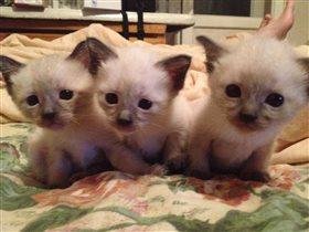 Котята в молодости