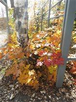 Осенние солнечные зайчики