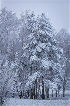 зимний ноябрь