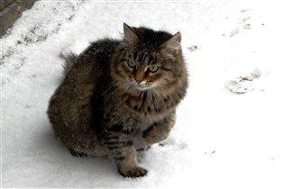 В такой шубке и снег в радость
