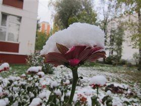 Очень ранний снег 09.09.2015