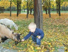 Наше первое общение с козочками))