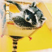 В «АФИМОЛЛ Сити» открылся контактный зоопарк «Погладь Енота»