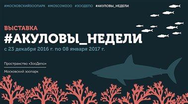 «Акуловы Недели» в Московском зоопарке