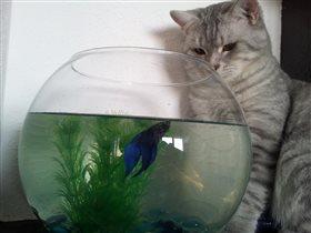 Мартин и его рыбка-друг)