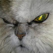 Дааарлинг!  наш любимый кот