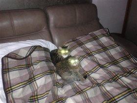 Ацкие коты