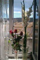 цветы в доме