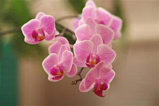 Цветы дарят нам красоту!!!