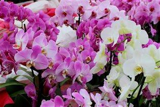 Орхидеи, цветы для женщин