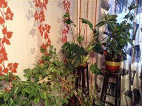 Мои комнатные цветы)))