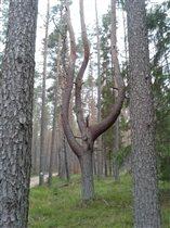 Чудо дерево 2