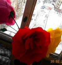 'Зимние Розы'