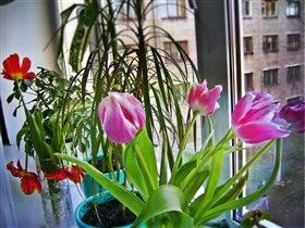 Пришло время весны...И тюльпанов...