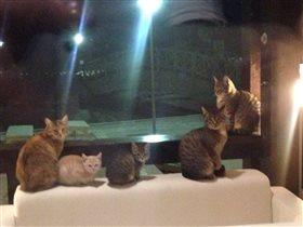 Ещё два котика и будет 7-Я
