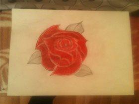 Аджарская роза