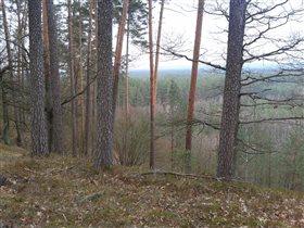 лесные высоты