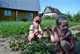 Детки собирают урожай