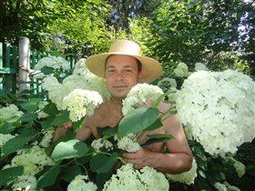 Гортензия цветёт - душа поёт )