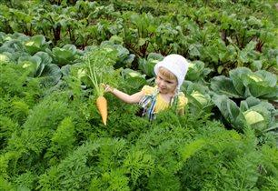 Дегустация морковки