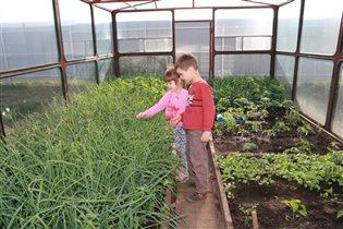 Юные агрономы в теплице