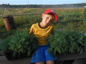 урожай  и Я