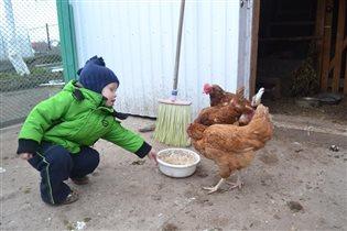 Маме быстро помогу, куриц всех я накормлю!