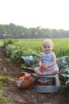 Собрали урожай