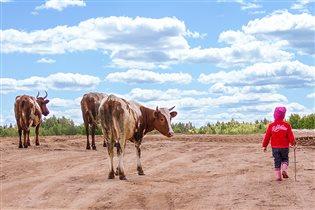 пасем коров
