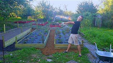 Выращиваем клубнику
