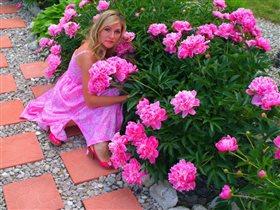 Цветут любимые пионы...