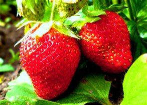 Лето...ягоды..