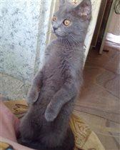 Любопытная Соня)))