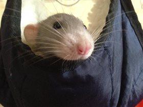 Любимый Крысик Тимка