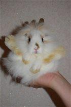 Кроля!