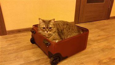 'чемний кіт'
