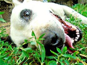 'Собака улыбака!'Автор: Цымбал Мария 12 лет