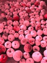Сколько яблок!